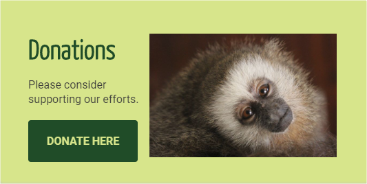 Donate to help fund Neoprimate Conservation projects.