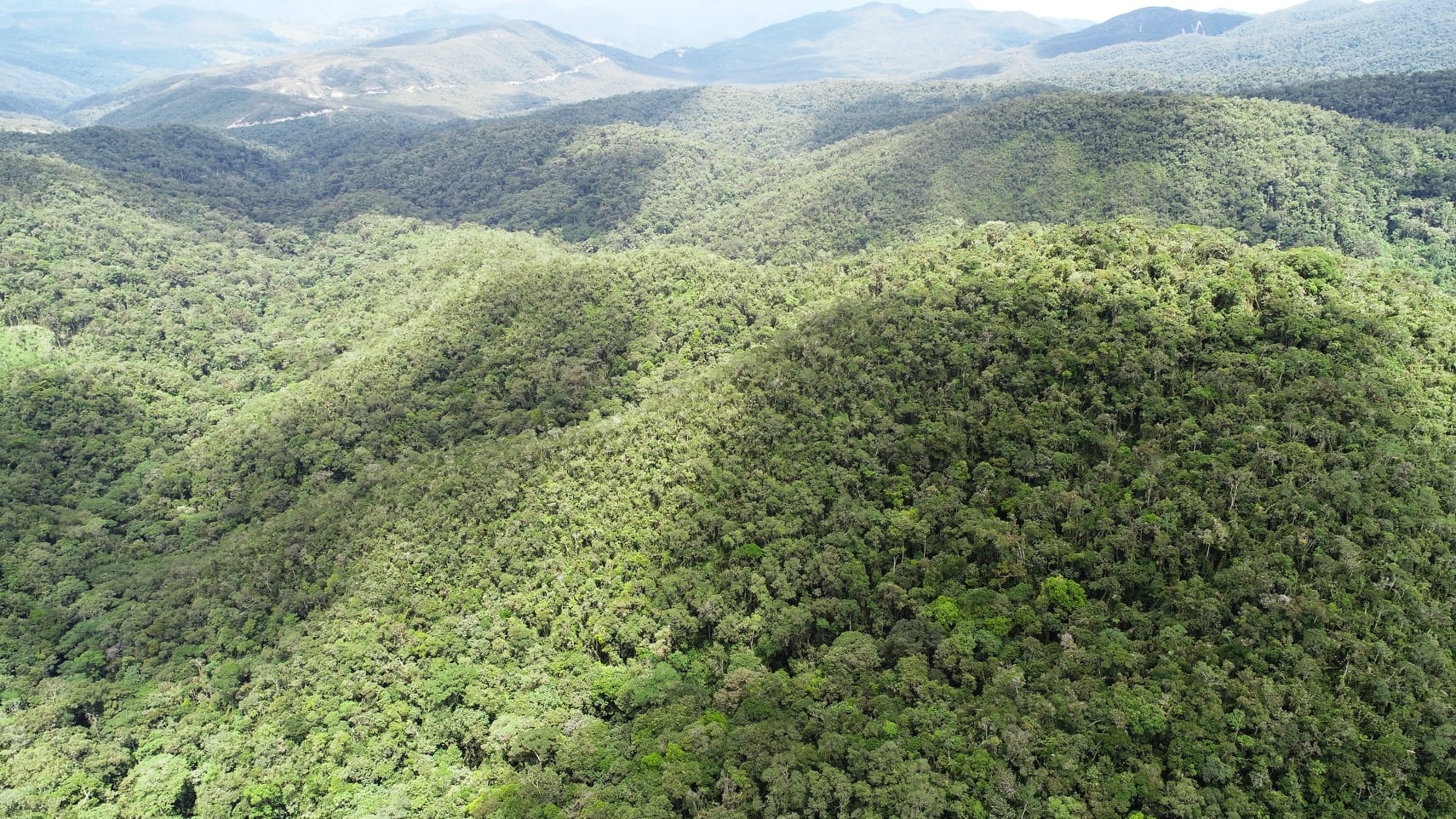 A wide angled view of the the forests to the north, including the Pampa del Burro Private Conservation Area, where the road can be seen as a white line, and areas of forest which will later be included in an extension of the reserve. Some of this area has been purchased by our local allies and will never be deforested!