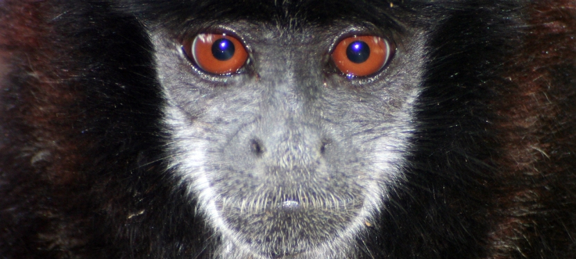 New Paper on Primate Rehabilitation