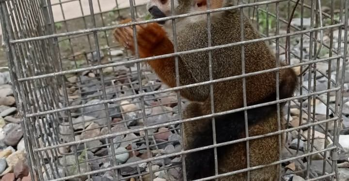 Monkeys Rescued!